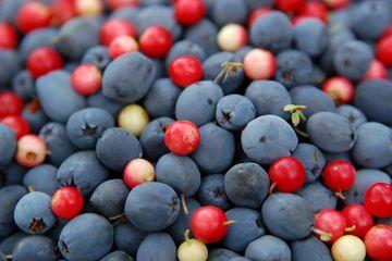лесные ягоды против прыщей